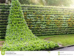 Vertical Gardening by Flower Wall Vertical Garden Suanluang Rama Ix Public Park Bangkok Thailand 49376204 Jpg