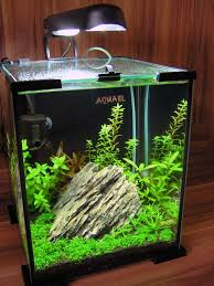 Aquascape Store Nano Shrimp Tank Google Search Wow Aqua Pets Pinterest