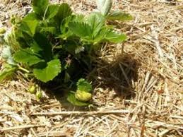 Garden Mulch Types - mulching types nowra u0026 shoalhaven bishops