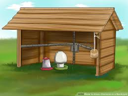 Chickens In The Backyard by How To Keep Chickens In A Backyard 15 Steps With Pictures