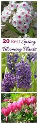 spring blooming plants my 20 top picks for early spring flowers