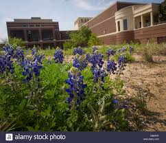 100 texas flower state tx state flower the most beautiful