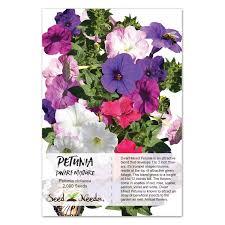 petunia flowers mixed petunia seeds petunia nana compacta