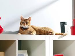 Decorative Cat Box 5 Fun Pieces Of Litter Box Furniture Petfinder
