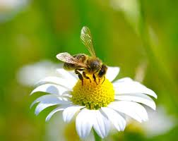 Bee Deterrent For Patio Can You Guess Which Flowers Don U0027t Attract Bees Top 10 Flowers