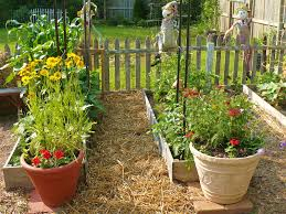 this week in the garden make it pretty perennials cold frame