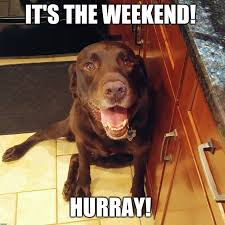 Weekend Dog Meme - one thing for sure labrador retrievers love to eat like and share