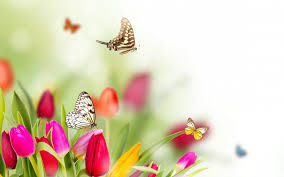 spring flowers and butterflies background hd simply wallpaper