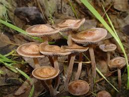 magic mushroom guide potent