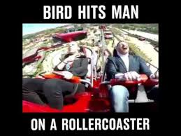 Roller Coaster Meme - bird hits man on a rollercoaster youtube