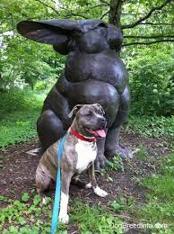 american pitbull terrier figurines raising a puppy spencer the blue nose brindle pit bull 15 months