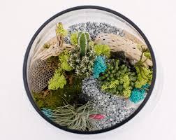 interior plant design botanical art and premium plantscapes