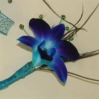 blue and purple orchids can you help me find blue purple dendrobium orchids the