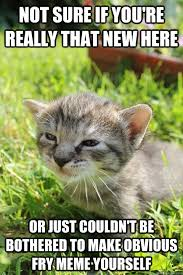 Make A Fry Meme - fry kitten memes quickmeme