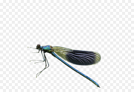 dragonfly pterygota small dragonfly png 2295 1567
