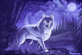 image how to draw a gray wolf timber wolf 1 000000015824 5 png