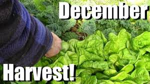 vegetable gardening gardening video forum