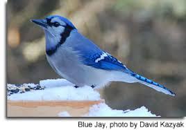 Backyard Wild Birds Feeding Wild Birds Maryland U0027s Wild Acres