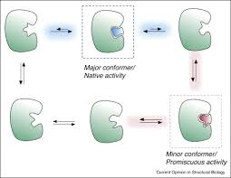 cooperativity and flexibility in enzyme evolution sciencedirect