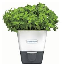 self watering indoor planters self watering indoor herb garden planter contemporary indoor