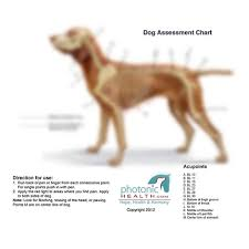 how many points for running a red light photonic health llc dog charts
