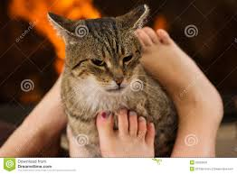cat and feet in front of the fireplace stock image image 52026633