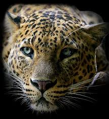 imagenes gif imagenes con movimiento fotoimagenes sinpalabras mujeres felinas gif movimiento