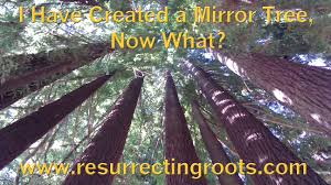 i created a mirror tree now what resurrecting roots