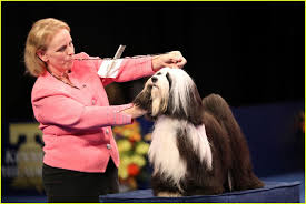 who won best in show at the purina national show 2016