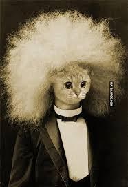 Cat Suit Meme - funny business suit cat planned meme bajiroo com