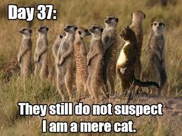 Mere Cat Meme - a mere cat imgur