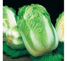 cabbage china buy wong bok cabbage 100 seeds online at cheap price