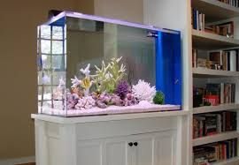 simple aquarium design combine with the living room to show a