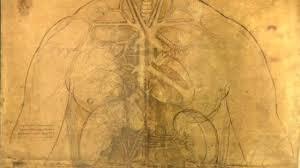 leonardo da vinci how accurate were his anatomy drawings bbc news