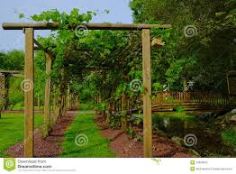 path in grape arbor stock image image of trellis grapevine