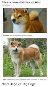 Shiba Inus Meme - 25 best memes about shiba inus shiba inus memes