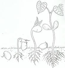 free parts of a plant coloring page label and color the parts of a