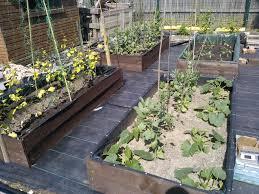 garden ideas low maintenance backyard lowes garden best low