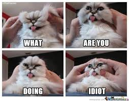 Grumpy Cat New Years Meme - meme center yourmom101 likes page 17