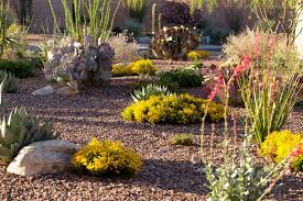 Desert Landscape Ideas For Backyards Backyard Desert Landscape Designs Desert Landscaping Good Idea