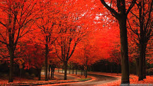 images of beautiful trees widescreen wallpaper sc