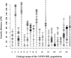 Qtl Mapping Frontiers Identification Of Major Quantitative Trait Loci For