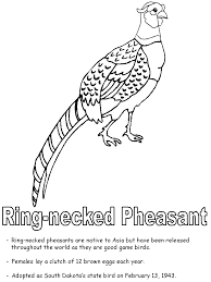 South Dakota birds images Ring necked pheasant coloring page gif