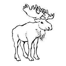 coloring pages boys moose coloring