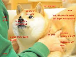 Doge Meme Best - anniversary doge meme doge best of the funny meme