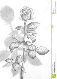 Pencil Sketch Of Flower Vase 3d Flower Drawings In Pencil How To Draw A Flower Vase Pencil