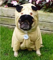 english bulldog halloween costumes 14 best dog halloween costumes of 2014