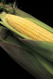 45 best corn images on pinterest sweet corn seeds and veggies