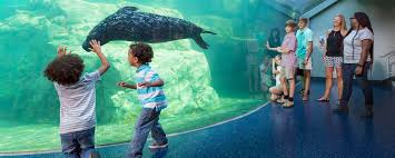 things to do in columbia sc events attractions u0026 arts