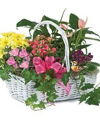 Cut Flower Garden by Blooming Garden Basket Green Plants Woyshners Flower Shop